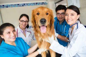 Du học Úc ngành bác sĩ thú y
