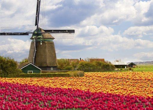 Điều kiện du học Hà Lan bao gồm những gì?